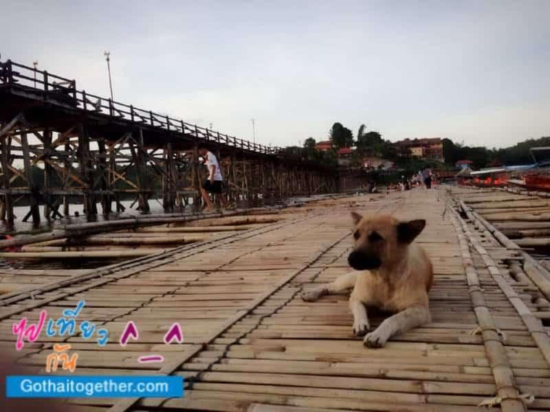 น้องหมา ชิลล์ๆ บน สะพานลูกบวบชั่วคราวและ สะพานมอญ ขาด สังขละบุรี
