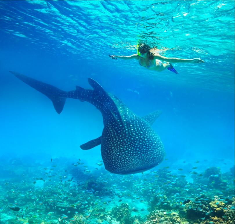 เกาะเซบู ประเทศฟิลิปปินส์ Cebu - Philippines