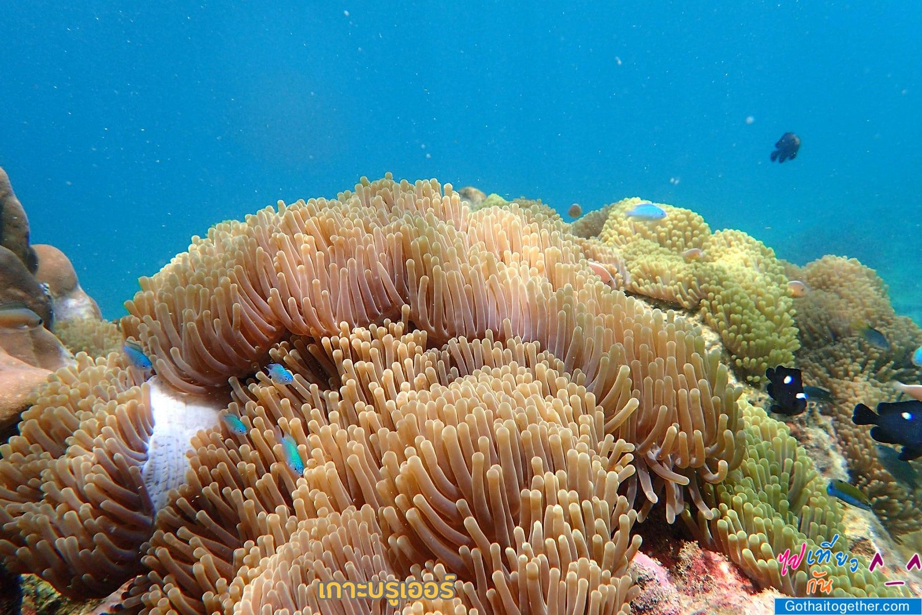 เกาะบรูเออร์ โลกใต้ทะเล สดใหม่ อันสวยงาม สายดำน้ำควรต้องมาเช็คอิน 47