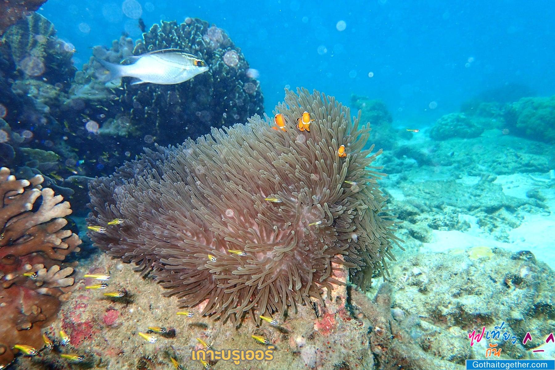 เกาะบรูเออร์ โลกใต้ทะเล สดใหม่ อันสวยงาม สายดำน้ำควรต้องมาเช็คอิน 48