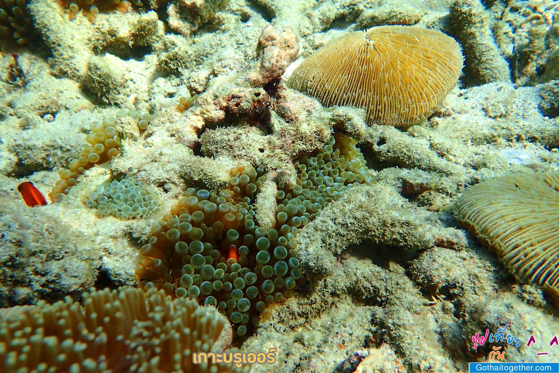 เกาะบรูเออร์ โลกใต้ทะเล สดใหม่ อันสวยงาม สายดำน้ำควรต้องมาเช็คอิน 50