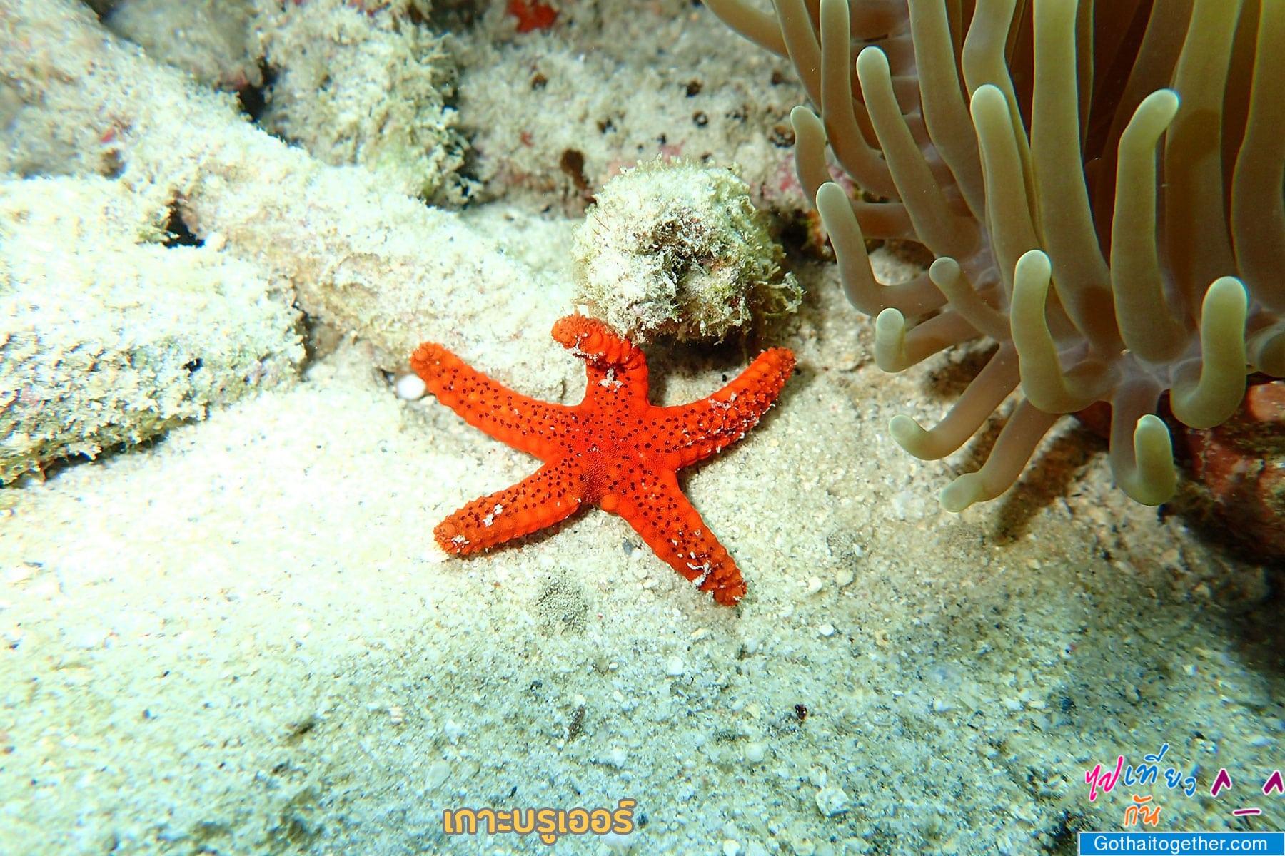 เกาะบรูเออร์ โลกใต้ทะเล สดใหม่ อันสวยงาม สายดำน้ำควรต้องมาเช็คอิน 51