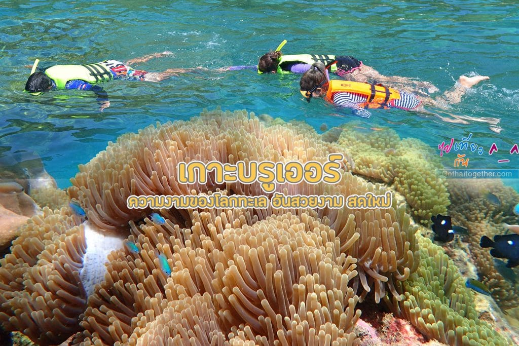 เกาะบรูเออร์ โลกใต้ทะเล สดใหม่ อันสวยงาม สายดำน้ำควรต้องมาเช็คอิน 35