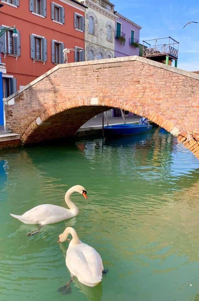คลองเวนิส อิตาลี กลับมาสวยใส ในช่วงปิดเมืองต้านโควิท(Covid-19) 12